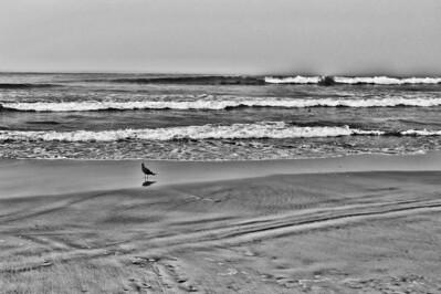 Lonely Bird.