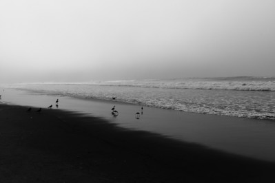 Sandpipers enjoy having the beach to themselves.