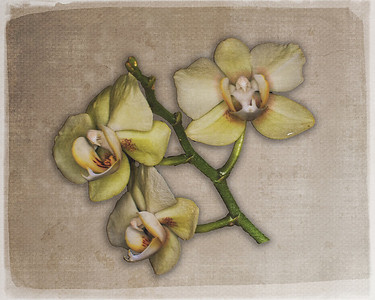 Pam DeCamp, Orchids on Linen, Digital photo on Linen texture paper, 16x20, $220, pdcpics1982@yahoo.com (740) 981-2207