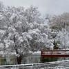 Snowy November Lakeshore