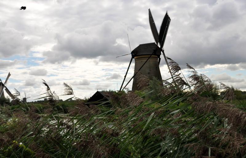 Windy Day in KInderdijk, Netherlands