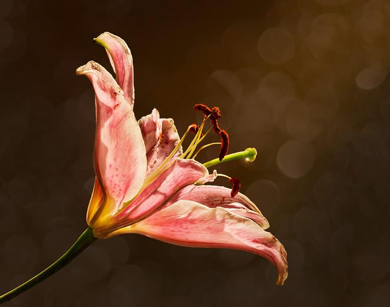 Bekkie Harper, Evening Lily, color print, finished size 16x20, $225, shutterbugbekkie@yahoo.com, 740-464-8028
