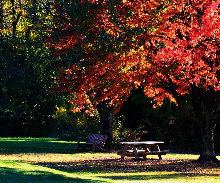 Fall Amberley Village Picnic