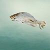 Bekkie Harper, Free Bird, color print, finished size 16x20, $225, shutterbugbekkie@yahoo.com, 740-464-8028