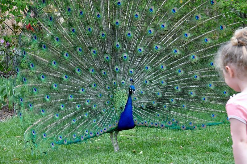 Hello, Beautiful Bird
