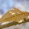 "Jane Ruwet Hopson, ""Last Leaf"", digital photograph on pearl paper, 20x16, j.ruwet.hopson@gmail.com, 513-607-3476"