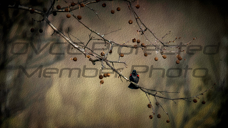 Pretty Little Black Bird