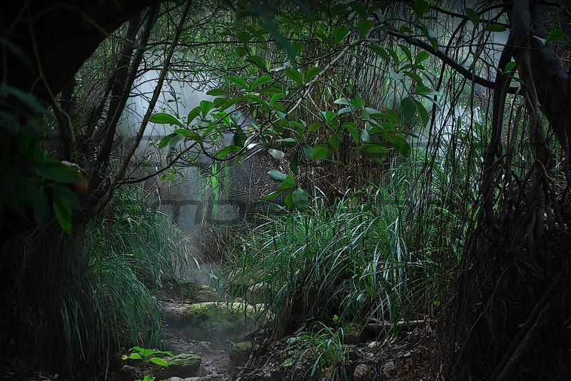 Tropic Stream