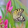 g wilson butterfly 16x20 lustre print $125 miphotog76@yahoo.com 513-314-9657