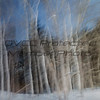 Larry Flinner,Ghostly Trees, Stanout print, 11X14, $110,LarryrF477@Fuse net, 4105887