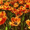 LarryFlinner, Zoo Flowers, Standout print,11X14, $90, LarryrF477@Fuse net,513-410-5887