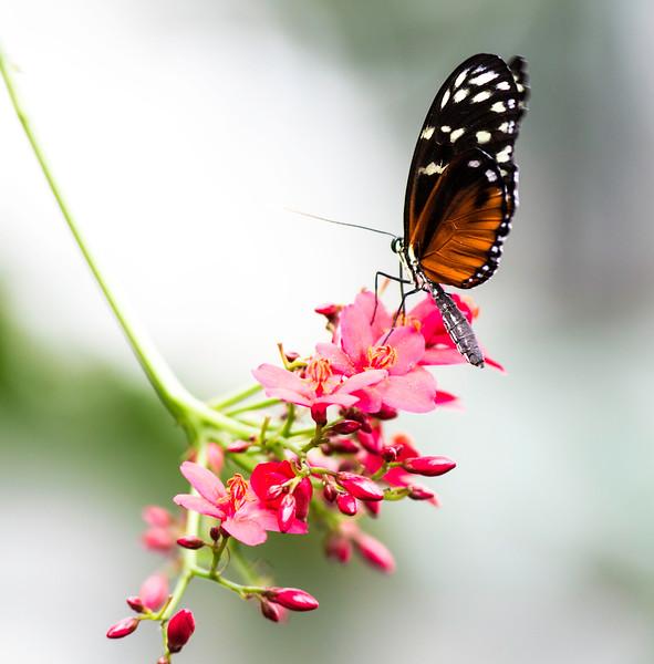 A Monarch's Rest
