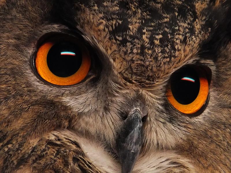 Ken Helferich, Eyes of the Hunter,  digital image, 16x20, $100.00, xjken99@hotmail.com, 513-741-0543