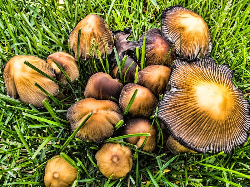 2011-05-25: Wet spring brought mushrooms.