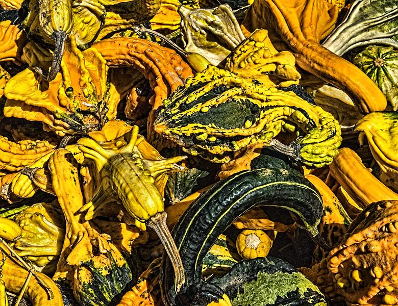 Pumpkins at Munson Farm