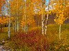 2011-10-17: Aspens at Vail