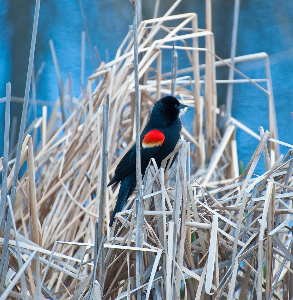 Birds (Walden Ponds, Boulder County; 2010-05-01)