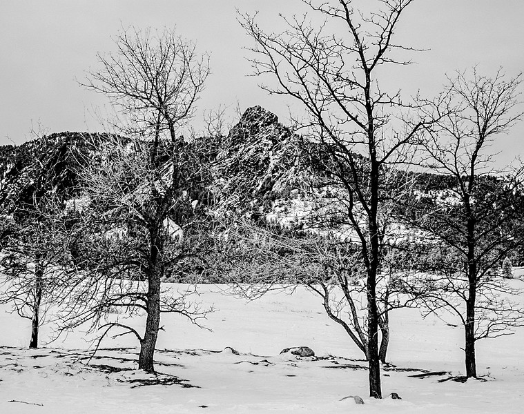 Trees and Mountains in Winter