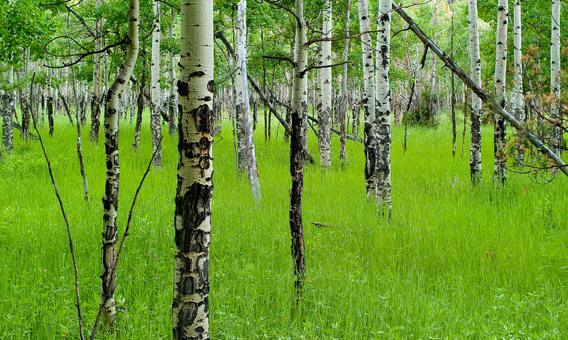 Aspens and Grass: Hiking Odessa and Fern Lakes, Rocky Mountain NP
