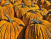 Pumpkins at Munson Farm