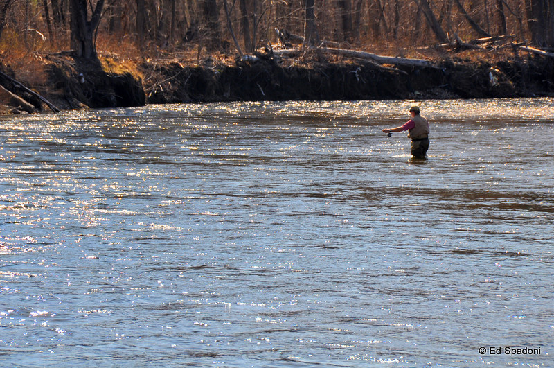 Fly fishing on the Saco
