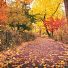Central Park Autumn - New York City - After the Rain