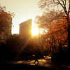 <h2>Flatiron Building Sunset - Autumn - New York City</h2>- By Vivienne Gucwa  Late autumn in New York City has its own brisk beauty. Cold air sharply punctuates the end of every wind gust and the sun retreats earlier and earlier every day. Autumn clings to December in the brief moments before the trees drop their leaves to the ground for good and every afternoon sunset reaches through the sharp cold with its lighted fingers in one last dramatic attempt to bring warmth to the city.   ---  This particular view is of the Flatiron Building, one of New York City's unique and classic skyscrapers, as seen from inside Madison Square Park during autumn.   ---