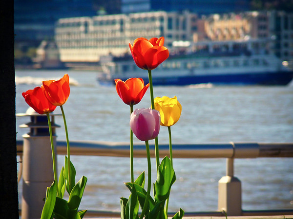 <h2>New Hope Springs Forth - Chelsea - New York City</h2> - By Vivienne Gucwa  The world opens up in the spring drenching itself in new warmth: heady intoxicating warmth that bubbles up beneath the surface for months before rushing over the parched earth.   And as the sun washes away all of the fears that have been buried beneath winter layers, petals open up one by one yawning delicately into the light of a thousand sparks of promise and hope.  ---