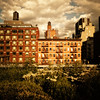 <h2>Deluge of Light - The Chelsea Skyline as seen from the High Line - New York City </h2> - By Vivienne Gucwa  The summer sun washes over the city one last time as storm clouds gather overhead in congress with themselves over when they should rain their praise down from the sky.   Wild flowers swayed by the whispers of the wind take one last look at the urban landscape as it glows in the sun's deluge of light waiting for the sky to quench their thirst.  ---  I love the drama that plays out in the sky before a storm especially when viewed alongside the buildings that make up the Chelsea skyline as viewed from the High Line. Tiny tenements stand in the shadow of towering older buildings with ornate architecture which are framed by the more modern architecture and the water towers stand proudly against the sky like beacons.  ---