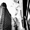 <h2>Synchronicity - Bird and Skyscrapers - New York City</h2> - By Vivienne Gucwa  Birds have a synchronous relationship with the city.   They fly with such brazen freedom through the man-made caverns soaring above the frenetic flow of the city below.  --
