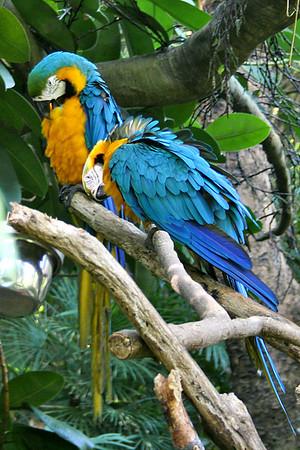 Ocean Park, Parrot