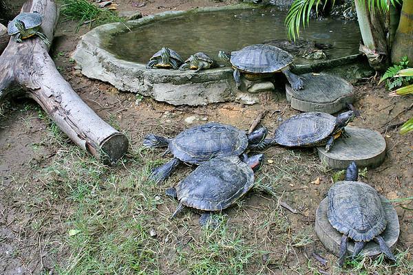 Ocean Park, Turtle