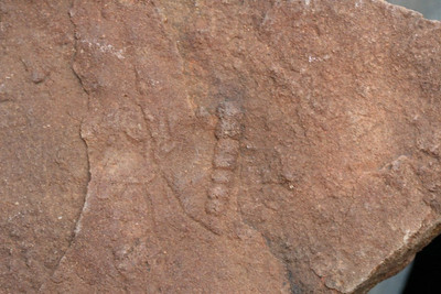 Nilpena Station Ediacaran fossils