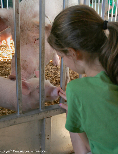 kimberly meets a cute little piglet as its mother carefully watches over them