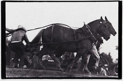 Horse pull at Agricultural Fair Martha's Vineyard