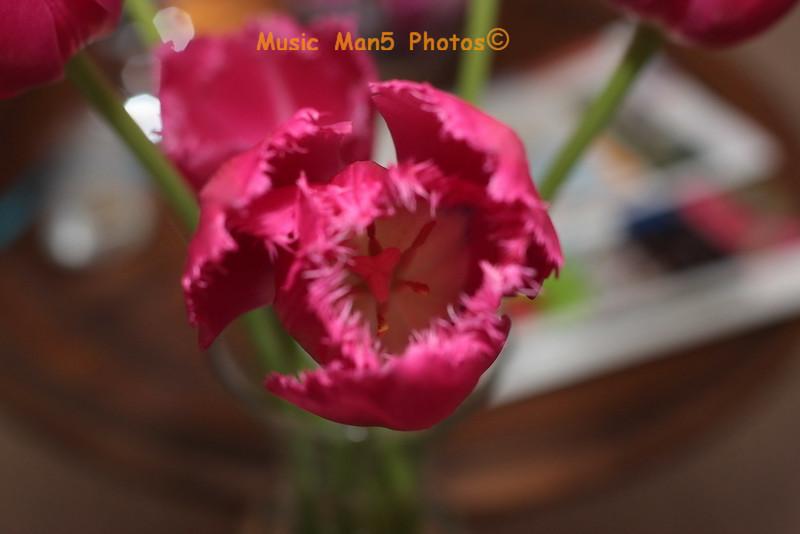 2008_05_11_8106