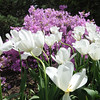 Flowers in bloom at Schoepfle Garden in Birmingham on Monday, May 16. STEVE MANHEIM/CHRONICLE