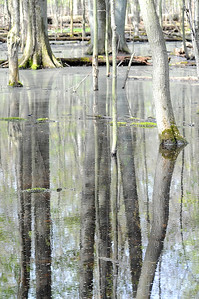 Trees reflect in the woods from recent rains at Sandy Ridge Reservation in North Ridgeville on Wednesday, May 4. STEVE MANHEIM/CHRONICLE