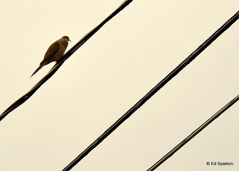 Bird on the diagonal