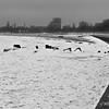 Icy Lake #62