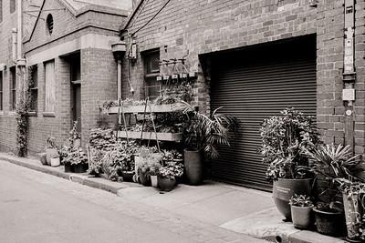 Guildford Lane