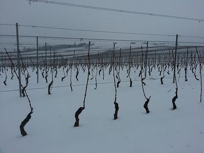 Dardagny, Gros, Wine