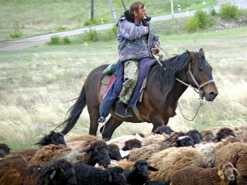 The 'Marlboro' man. Sheep herder. (Khakassia, Russia)