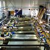 Tunaycha salmon processing plant. (Sakhalin, Russia)