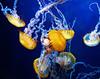 Monterey Bay Aqurium