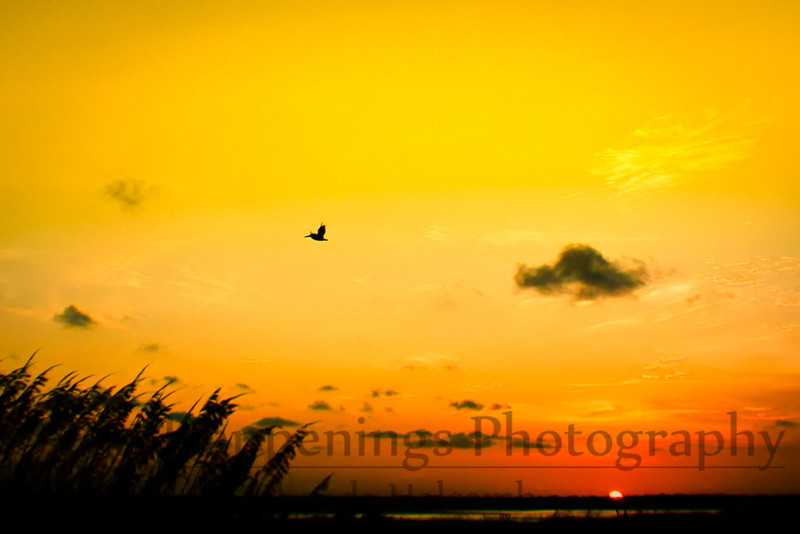 Bryan Beach, Texas by Rhonda Holcomb ©2011 All Rights Reserved
