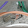 Matching Hose!! <br /> ©2009 FlorieGray