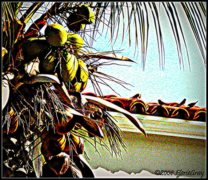 CocoBirds  <b>Copyright © Florence T. Gray. This image is protected under International Copyright laws and may not be downloaded, reproduced, copied, transmitted or manipulated without written permission.</b>