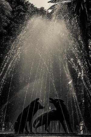 A fountain in Coyoacan, a suburb of Mexico City