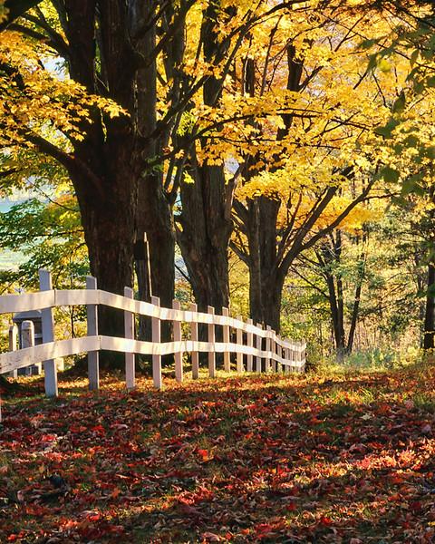 Fenceline - Peacham, Vermont